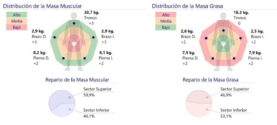 Distribución de la masa muscular y de la masa grasa